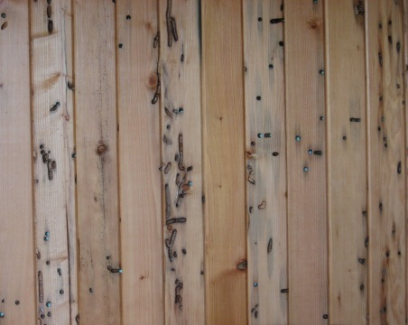 Wormwood Wall Paneling-Recycled Walls-Trinity River Marine