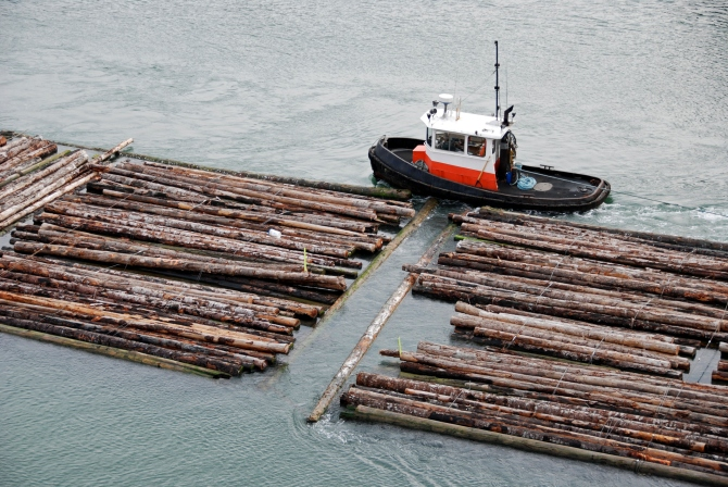 Tugboat guiding log rafts to sawmill upriver